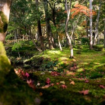 Saihoji, Moss Temple, Kokedera