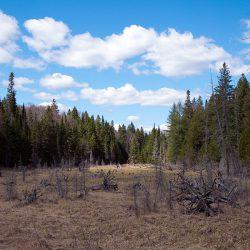Algonquin Provincial Park, Kanada