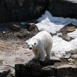 Zoo Sauvage de St-Félicien, Quebec